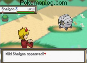 wild shelgin appeared